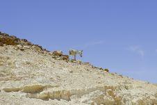 Free Donkey In Judean Desert Royalty Free Stock Photo - 5308335