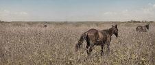 Free Wild Horses Panorama Royalty Free Stock Images - 5308799