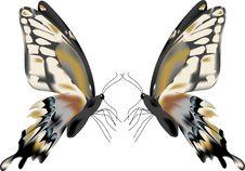 Free Butterflies Stock Photos - 5309513