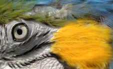 Free Blue And Yellow Macaw Stock Photography - 5309752