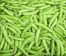 Free Peas In Pods Royalty Free Stock Photography - 5309777