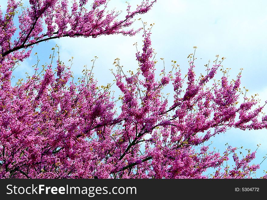 Purple flowers in a tree free stock images photos 5304772 purple flowers in a tree mightylinksfo