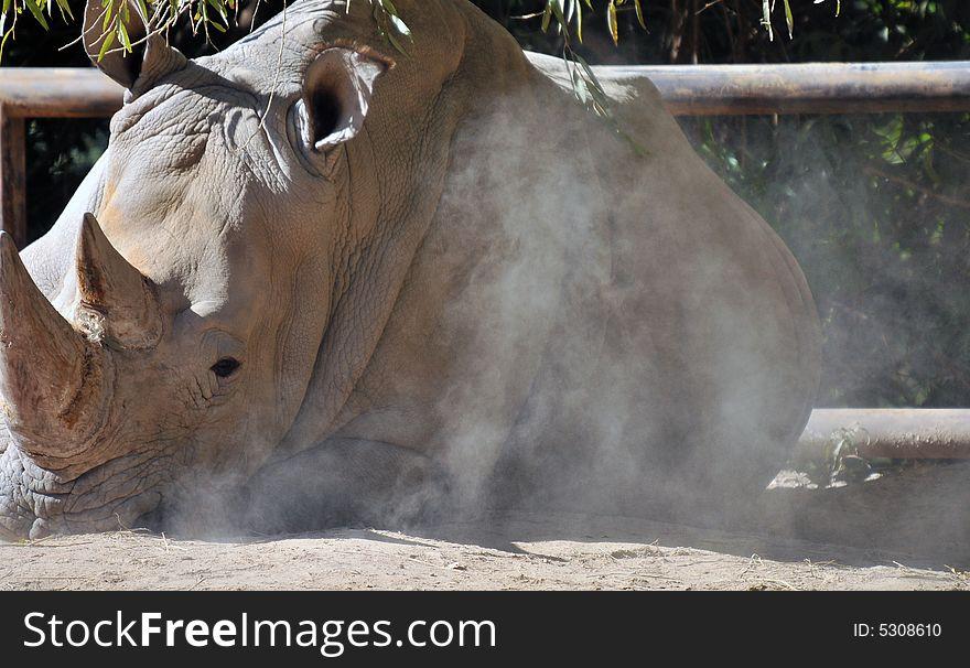 Rare White Rhinoceros