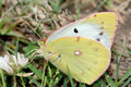 Free Butterfly Stock Photos - 5312533