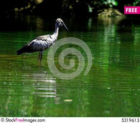 Free Open Bill Stork Stock Photos - 5319613