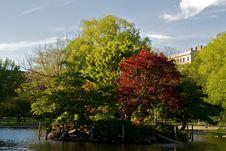 Free Island Trees Royalty Free Stock Photo - 5310075