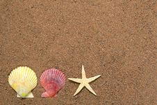 Free Seashells And Star On Sand Royalty Free Stock Images - 5311249