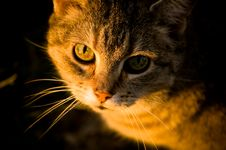 Free Cat In The Sunlight Royalty Free Stock Photos - 5311608