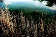 Free Reeds Royalty Free Stock Image - 5311676