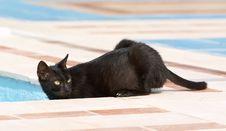 Black Cat Looking Royalty Free Stock Photo