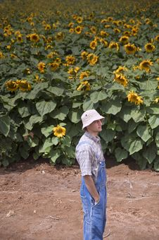 Free Farmer In Sunflower Field Royalty Free Stock Photography - 5312167