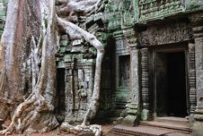 Free Cambodia; Angkor; Ta Prohm Temple Stock Images - 5312304