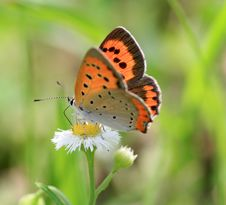 Free Butterfly Royalty Free Stock Photo - 5312455