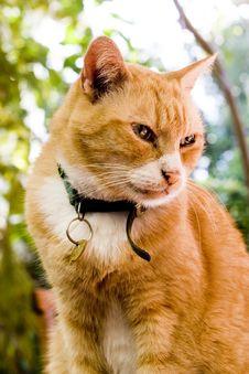 Free Cat Royalty Free Stock Photo - 5312595
