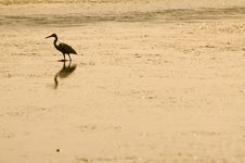 Free Heron At The Sunrise Stock Photography - 5313362