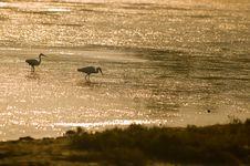 Free Heron At The Sunrise Stock Image - 5313371