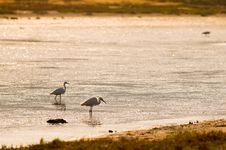 Free Heron At The Sunrise Royalty Free Stock Image - 5313656