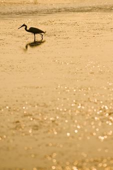 Free Heron At The Sunrise Royalty Free Stock Images - 5313749