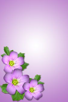 Free Purple Flower Stock Images - 5313964
