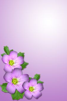 Free Purple Flower Royalty Free Stock Images - 5313999