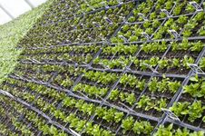 Rows Of Small Potted Plants Royalty Free Stock Images