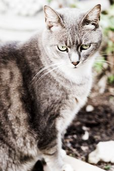 Free Cat Stock Photography - 5314892
