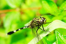 Free Dragonfly Stock Images - 5314994