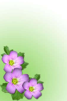 Free Purple Flower Royalty Free Stock Photos - 5315078