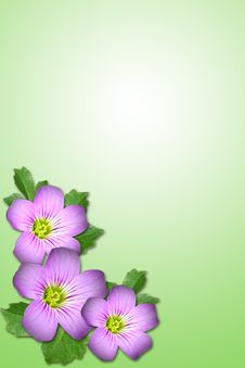 Free Purple Flower Stock Photography - 5315122