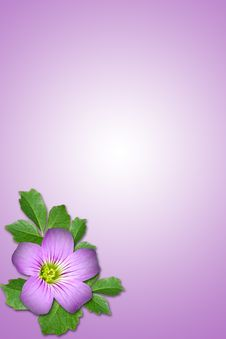 Purple Flower Stock Images