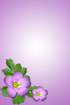 Free Purple Flower Stock Photos - 5315213