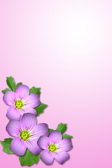 Free Purple Flower Royalty Free Stock Photo - 5315225