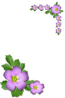 Free Purple Flower Royalty Free Stock Photos - 5315348