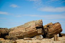 Free Petrified Wood In Argentina. Stock Images - 5315664