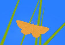 Free Orange Butterfly Stock Images - 5317274