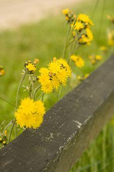 Free Yellow Flowers Royalty Free Stock Photo - 5317805