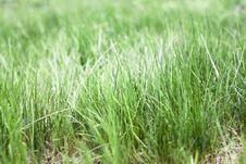 Free Grass Stock Photos - 5318683