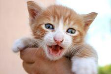 Free Kitten Royalty Free Stock Images - 5319769