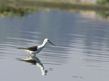 Free Sandpiper Stock Images - 5319804