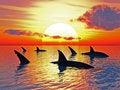 Free Sharks Royalty Free Stock Photography - 5320517
