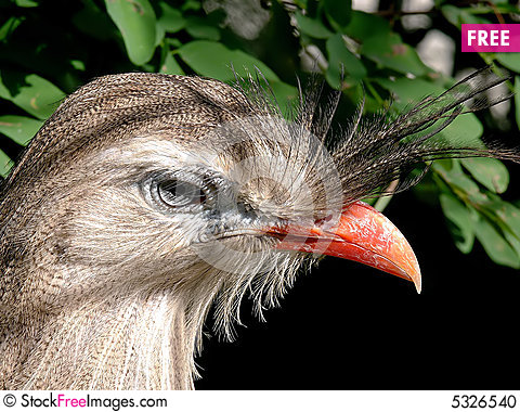 Free Red Legged Seriema Stock Photo - 5326540