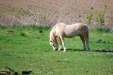 Free Horse Royalty Free Stock Image - 5320086