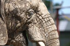 Free Elephant Close Up Stock Images - 5320184