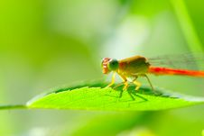 Free Damselfly Stock Photo - 5320350