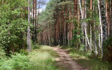 Free Road In The Forest Stock Photography - 5320402