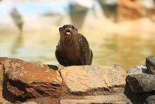 Free Otter Stock Image - 5320411