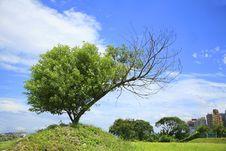 Free Tree And Blue Sky Royalty Free Stock Photo - 5321915