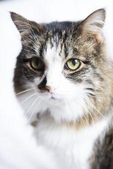 Free Cat Royalty Free Stock Photos - 5323308