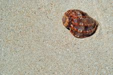 Free Beach Sand, Sea Shell. Stock Images - 5324794