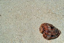 Free Beach Sand, Sea Shell. Royalty Free Stock Images - 5324889